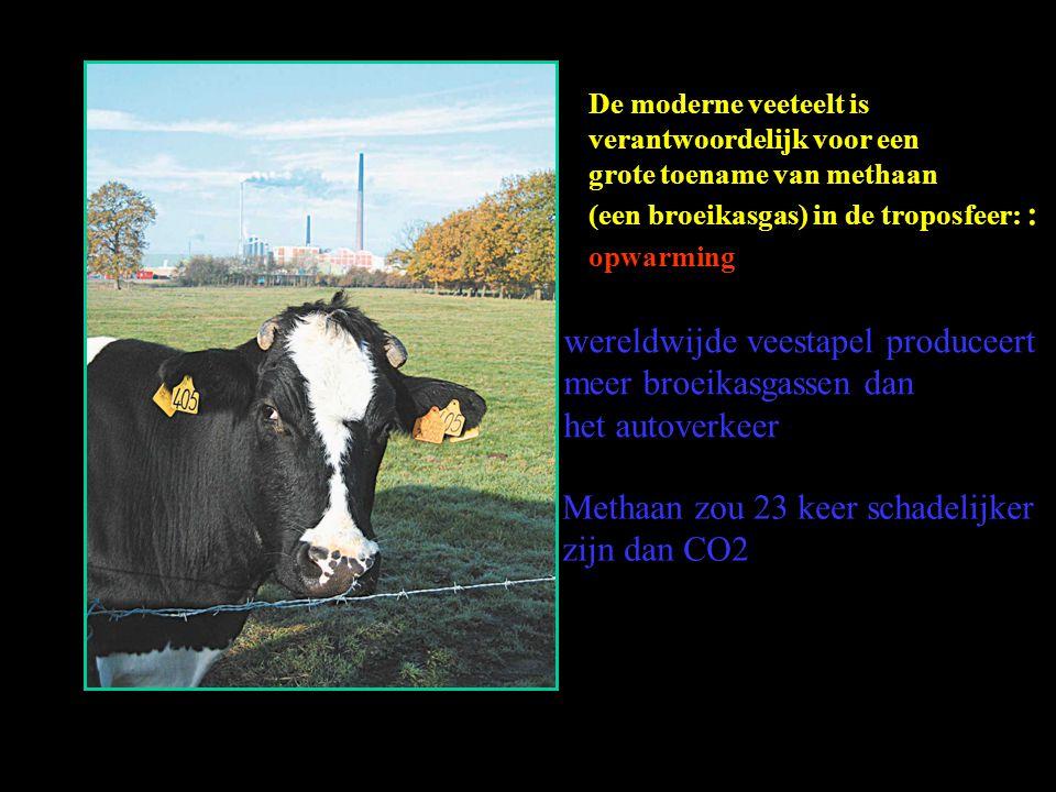 wereldwijde veestapel produceert meer broeikasgassen dan