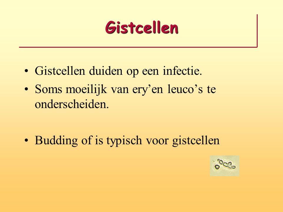 Gistcellen Gistcellen duiden op een infectie.
