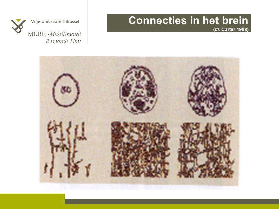 Connecties in het brein (cf. Carter 1998)