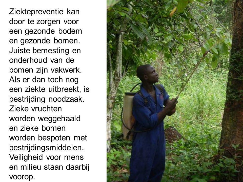 Ziektepreventie kan door te zorgen voor een gezonde bodem en gezonde bomen.