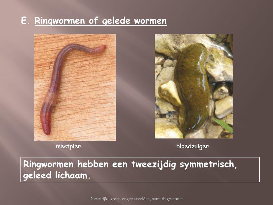 Dierenrijk: groep ongewervelden, stam ringwormen