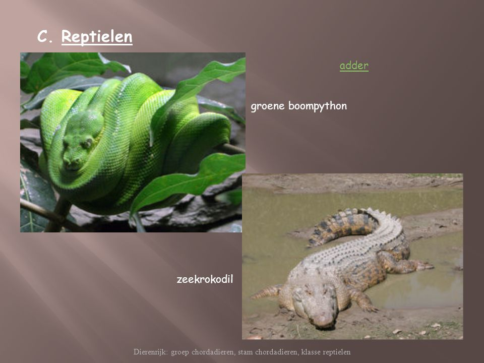 Dierenrijk: groep chordadieren, stam chordadieren, klasse reptielen