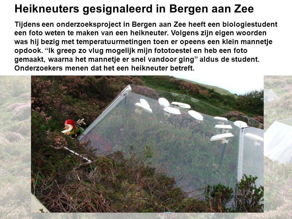 Discussie Heikneuters gesignaleerd in Bergen aan Zee
