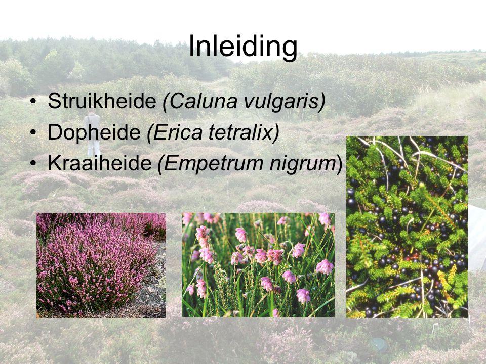 Inleiding Struikheide (Caluna vulgaris) Dopheide (Erica tetralix)