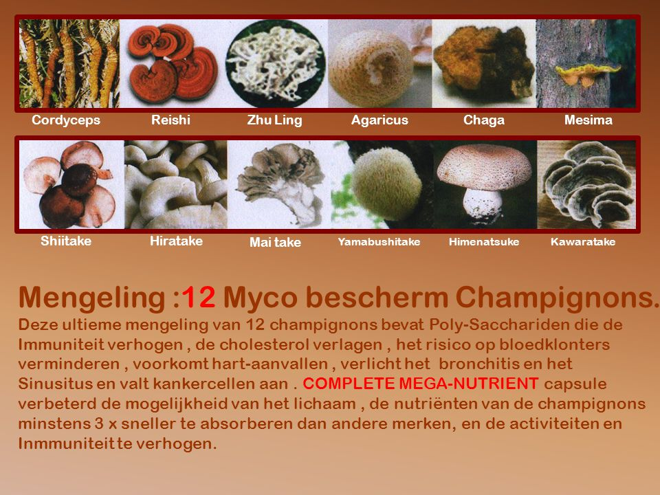 Mengeling :12 Myco bescherm Champignons.