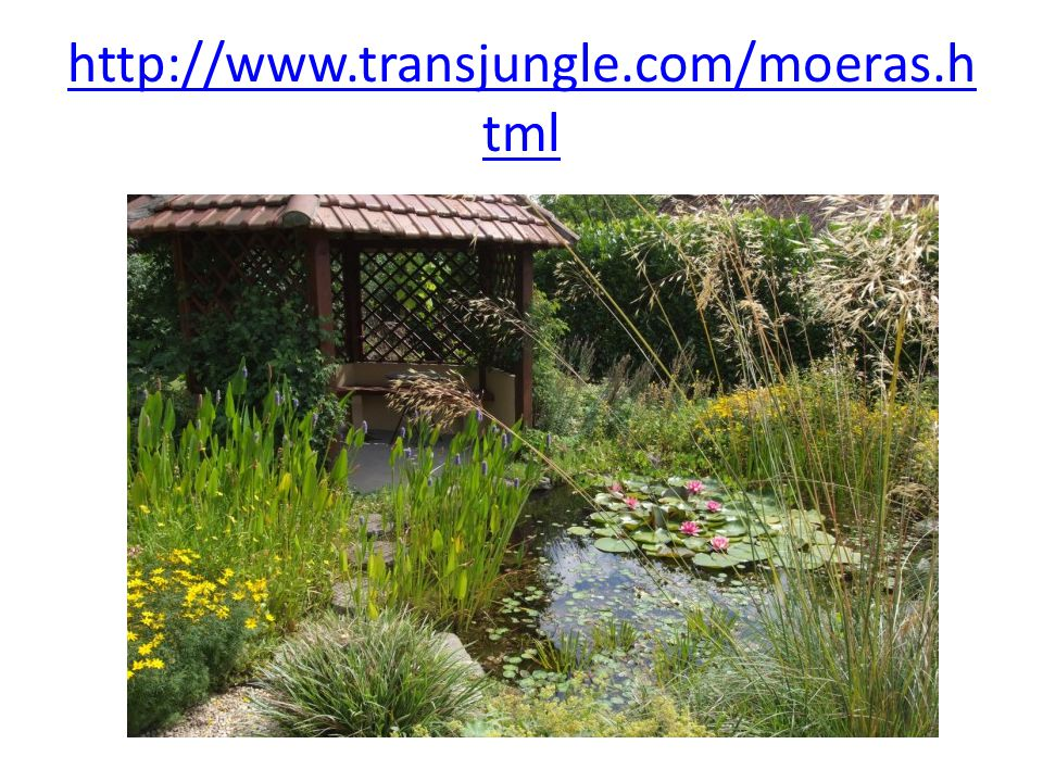 http://www.transjungle.com/moeras.html