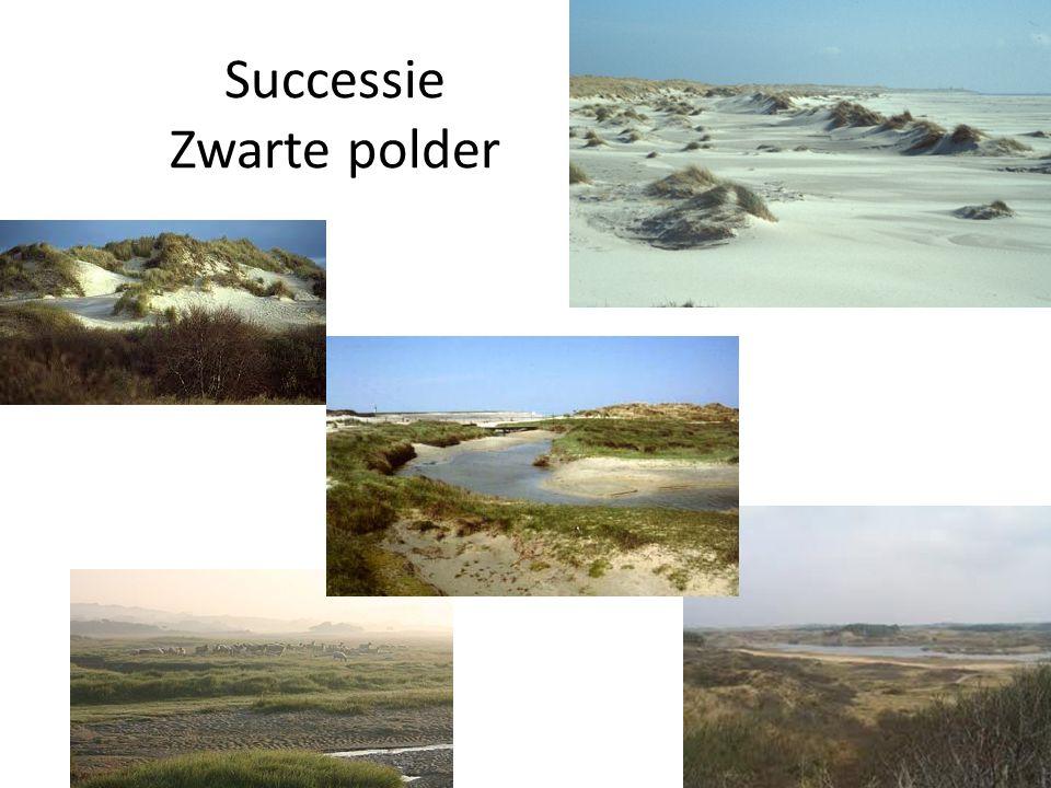 Successie Zwarte polder