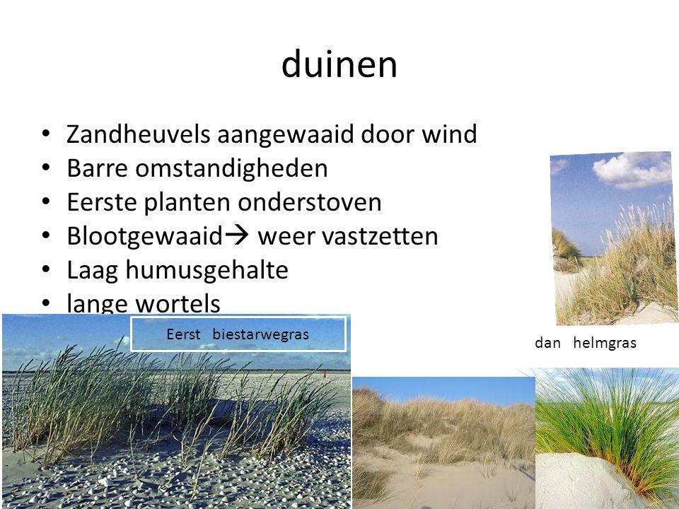 duinen Zandheuvels aangewaaid door wind Barre omstandigheden