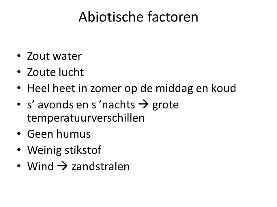 Abiotische factoren Zout water Zoute lucht