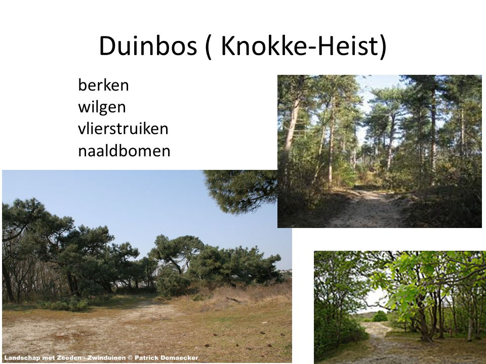 Duinbos ( Knokke-Heist)