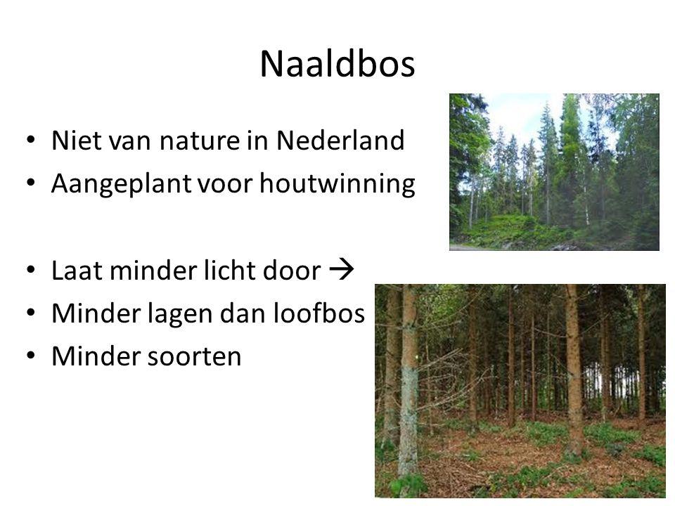 Naaldbos Niet van nature in Nederland Aangeplant voor houtwinning