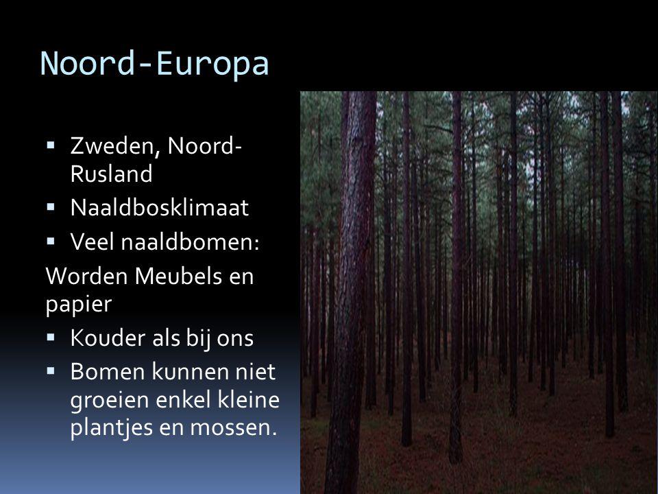 Noord-Europa Zweden, Noord- Rusland Naaldbosklimaat Veel naaldbomen: