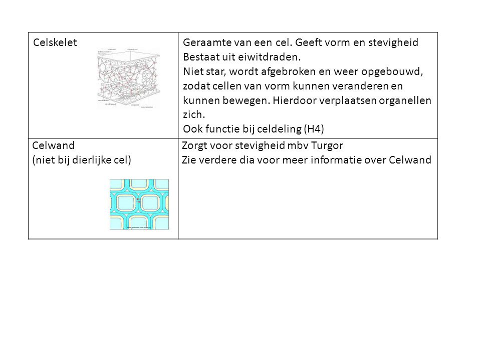 Celskelet Geraamte van een cel. Geeft vorm en stevigheid. Bestaat uit eiwitdraden.