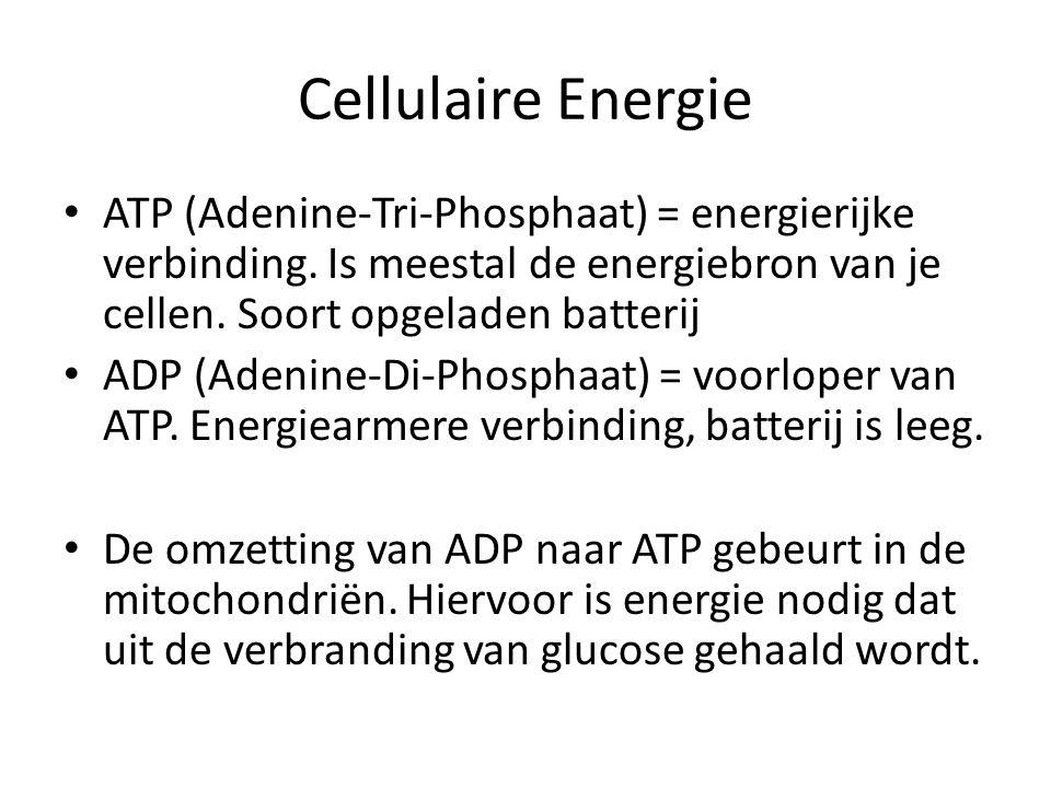 Cellulaire Energie ATP (Adenine-Tri-Phosphaat) = energierijke verbinding. Is meestal de energiebron van je cellen. Soort opgeladen batterij.