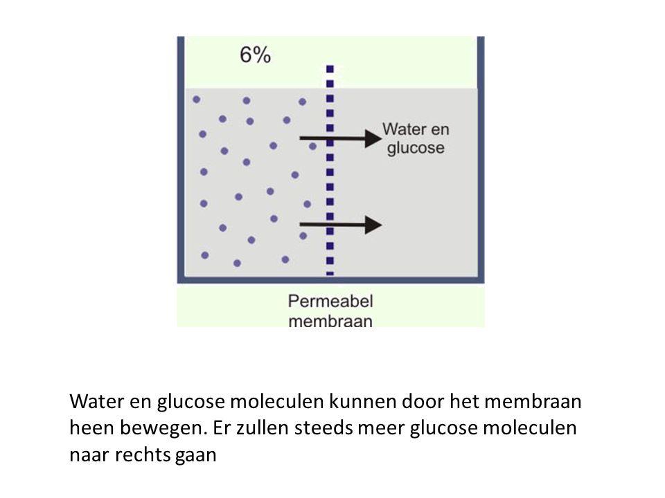 Water en glucose moleculen kunnen door het membraan heen bewegen