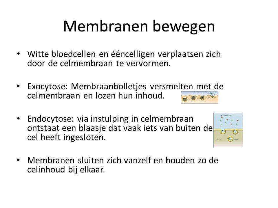 Membranen bewegen Witte bloedcellen en ééncelligen verplaatsen zich door de celmembraan te vervormen.
