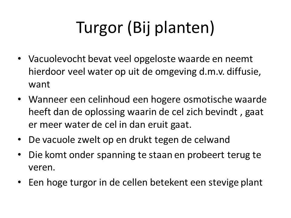 Turgor (Bij planten) Vacuolevocht bevat veel opgeloste waarde en neemt hierdoor veel water op uit de omgeving d.m.v. diffusie, want.