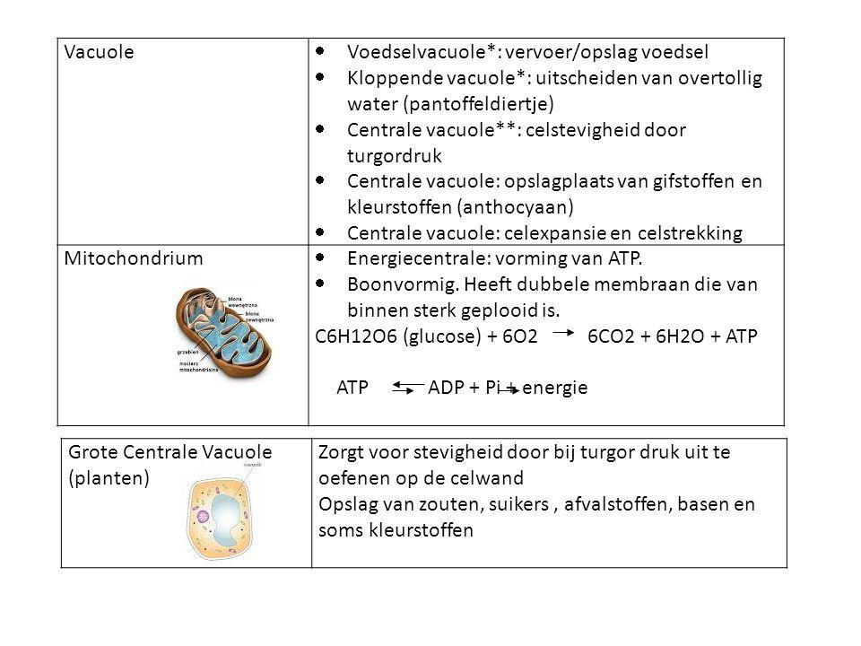Vacuole Voedselvacuole*: vervoer/opslag voedsel. Kloppende vacuole*: uitscheiden van overtollig water (pantoffeldiertje)