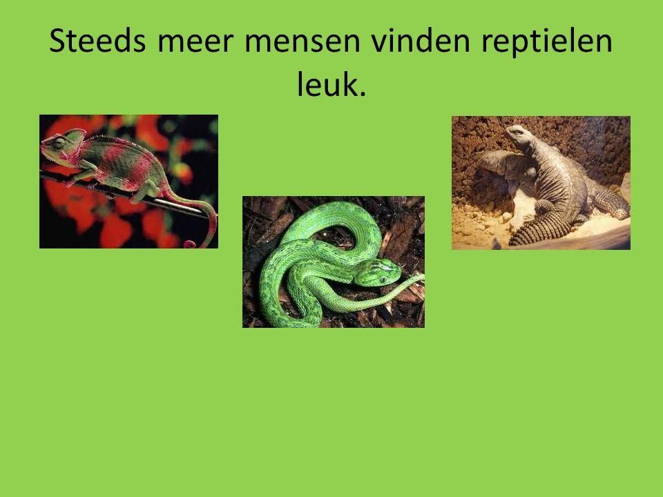 Steeds meer mensen vinden reptielen leuk.