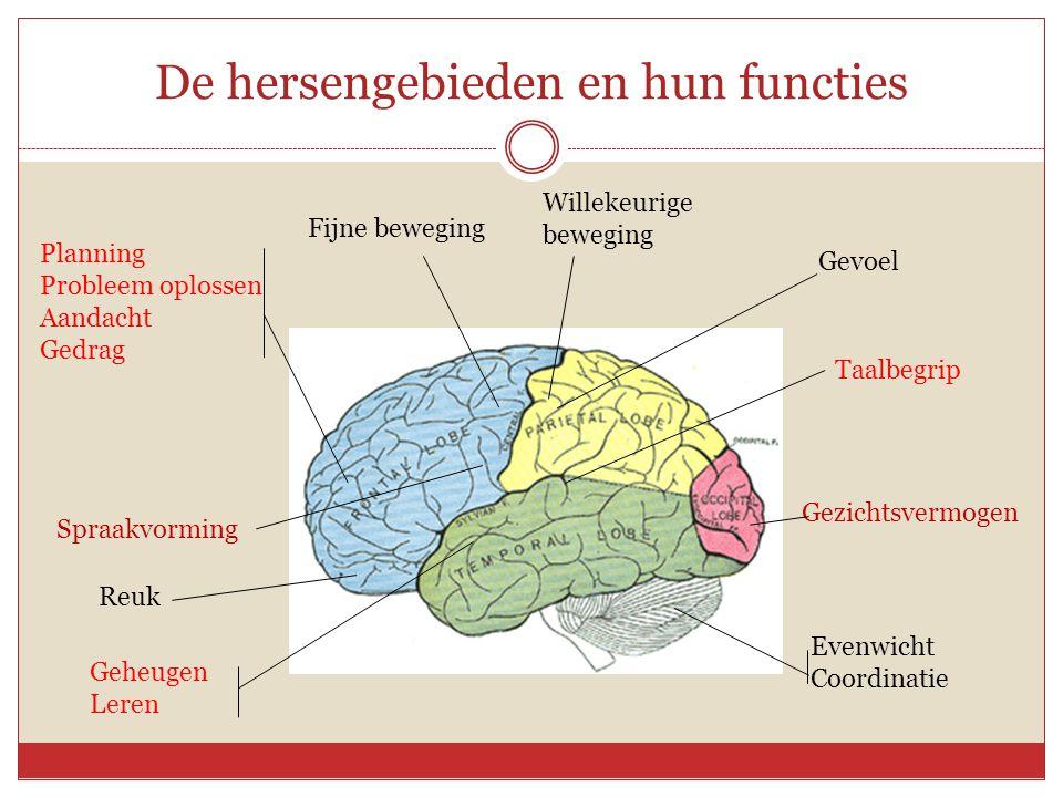De hersengebieden en hun functies
