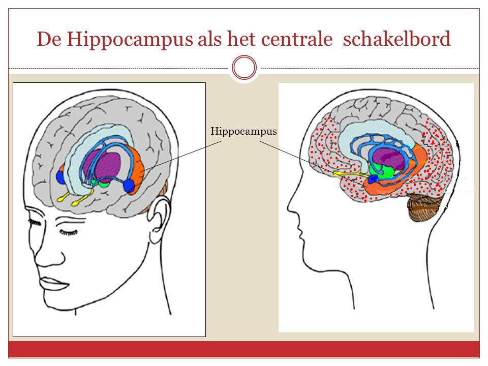 De Hippocampus als het centrale schakelbord
