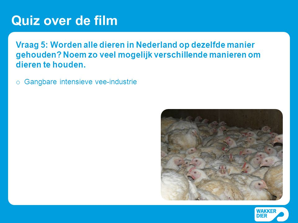 Quiz over de film