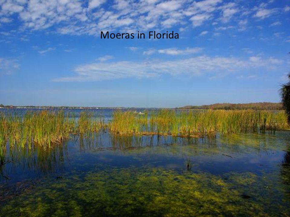 Moeras in Florida