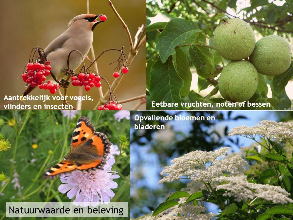 Natuurwaarde en beleving