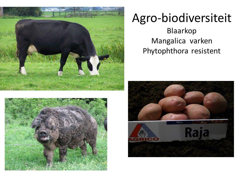 Agro-biodiversiteit Blaarkop Mangalica varken Phytophthora resistent
