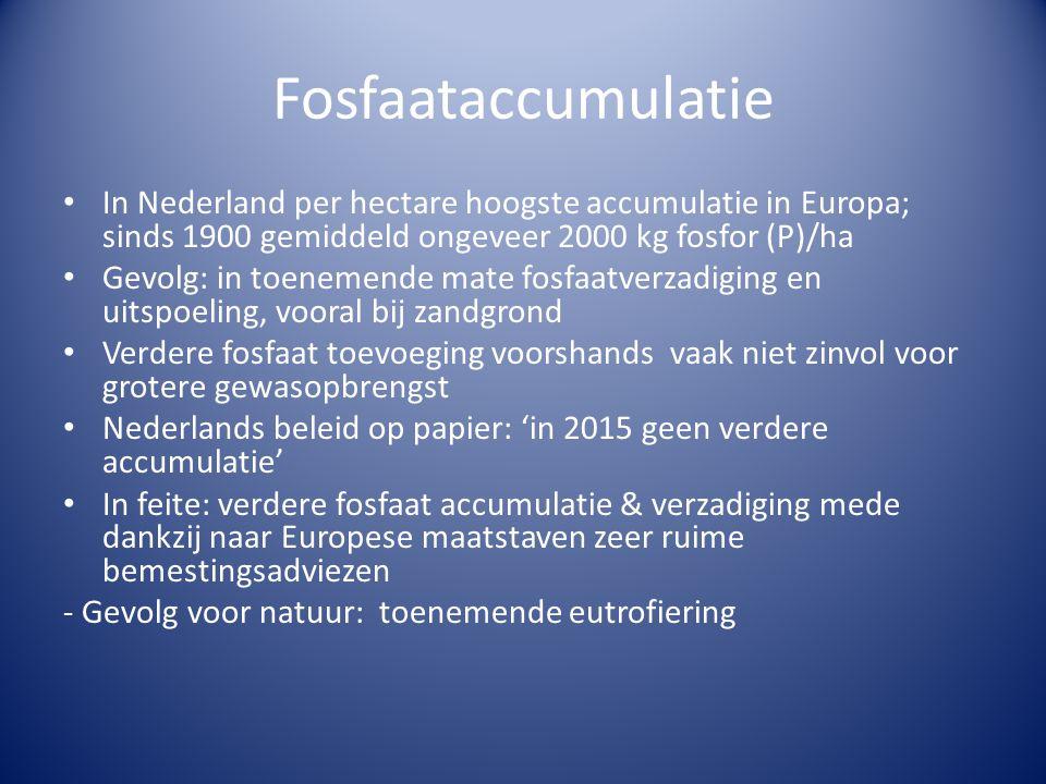 Fosfaataccumulatie In Nederland per hectare hoogste accumulatie in Europa; sinds 1900 gemiddeld ongeveer 2000 kg fosfor (P)/ha.