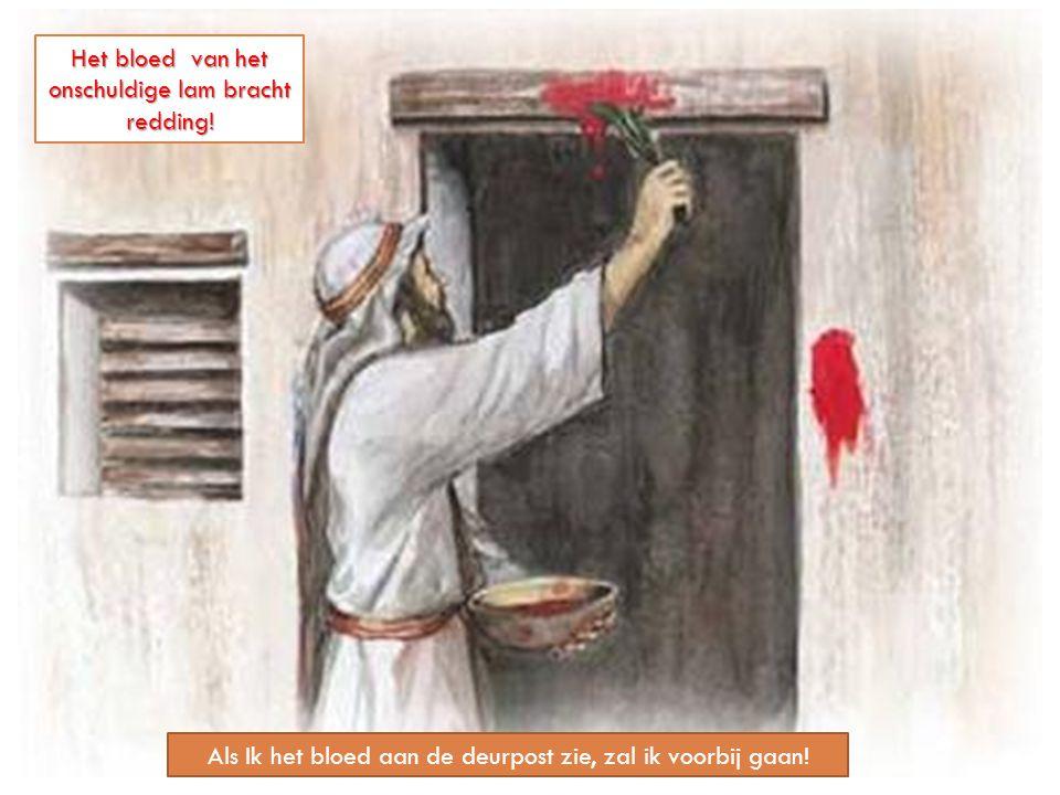 Het bloed van het onschuldige lam bracht redding!
