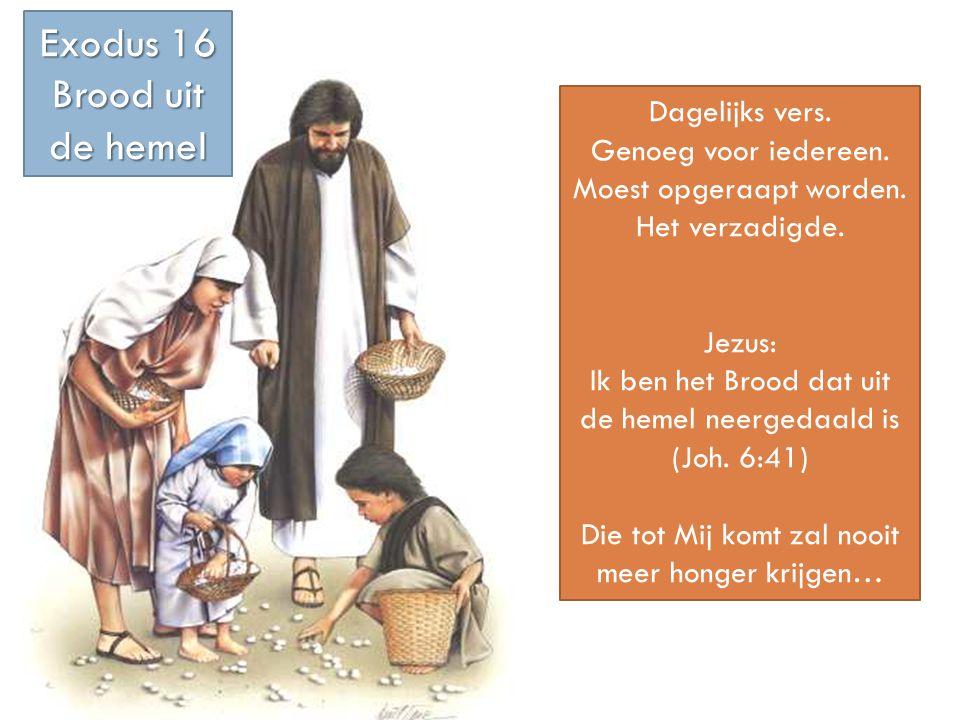 Exodus 16 Brood uit de hemel Dagelijks vers. Genoeg voor iedereen.