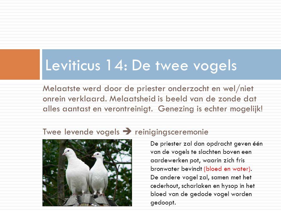 Leviticus 14: De twee vogels