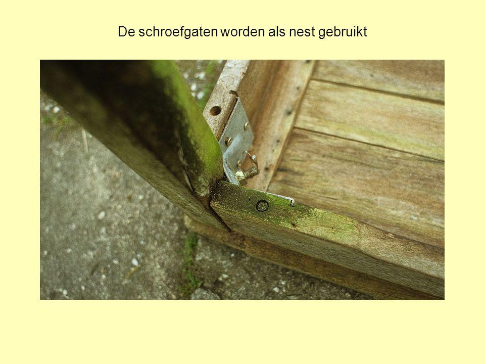 De schroefgaten worden als nest gebruikt
