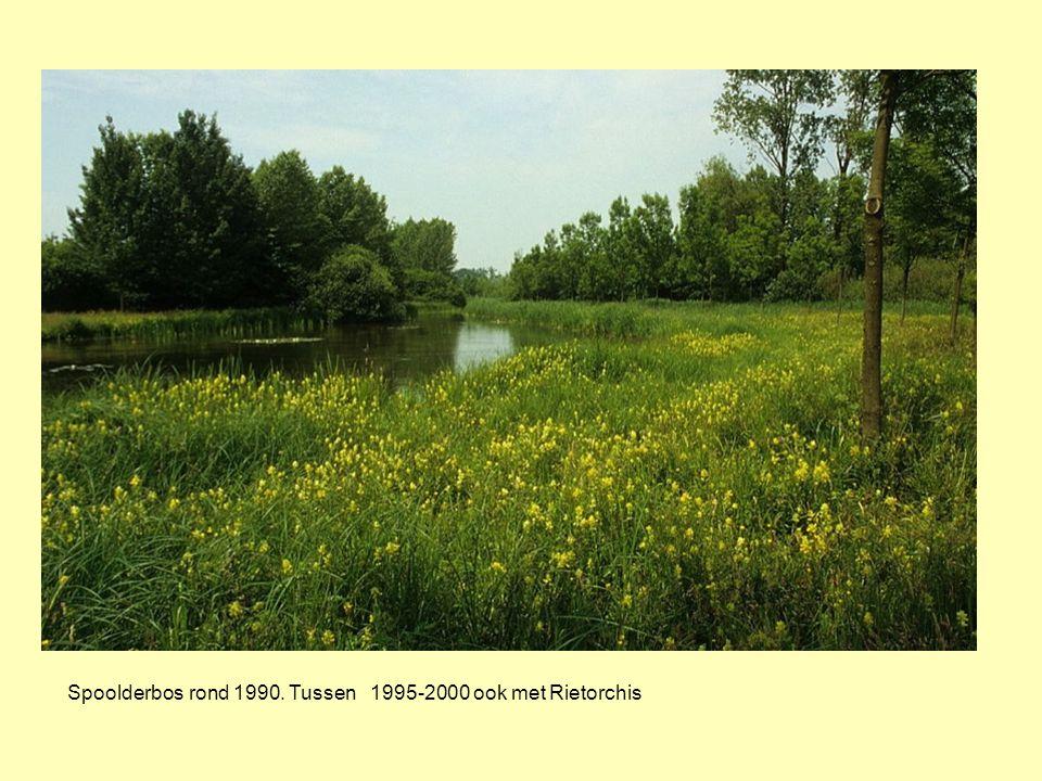 Spoolderbos rond 1990. Tussen 1995-2000 ook met Rietorchis
