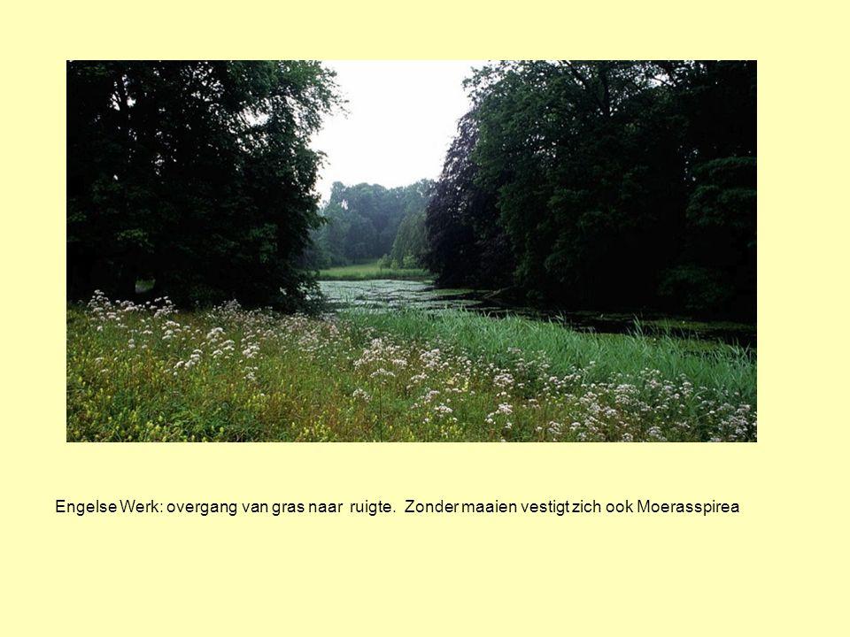 Engelse Werk: overgang van gras naar ruigte