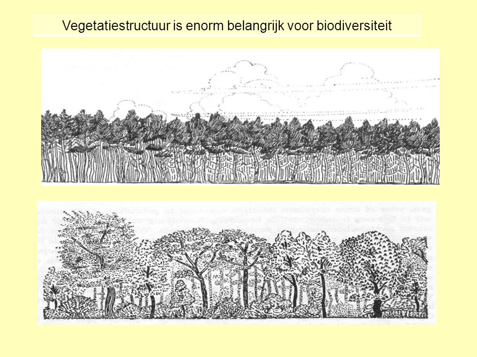 Vegetatiestructuur is enorm belangrijk voor biodiversiteit