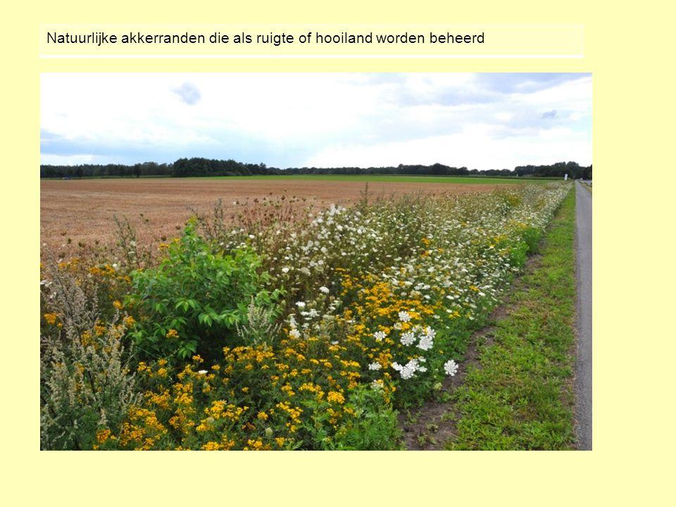 Natuurlijke akkerranden die als ruigte of hooiland worden beheerd