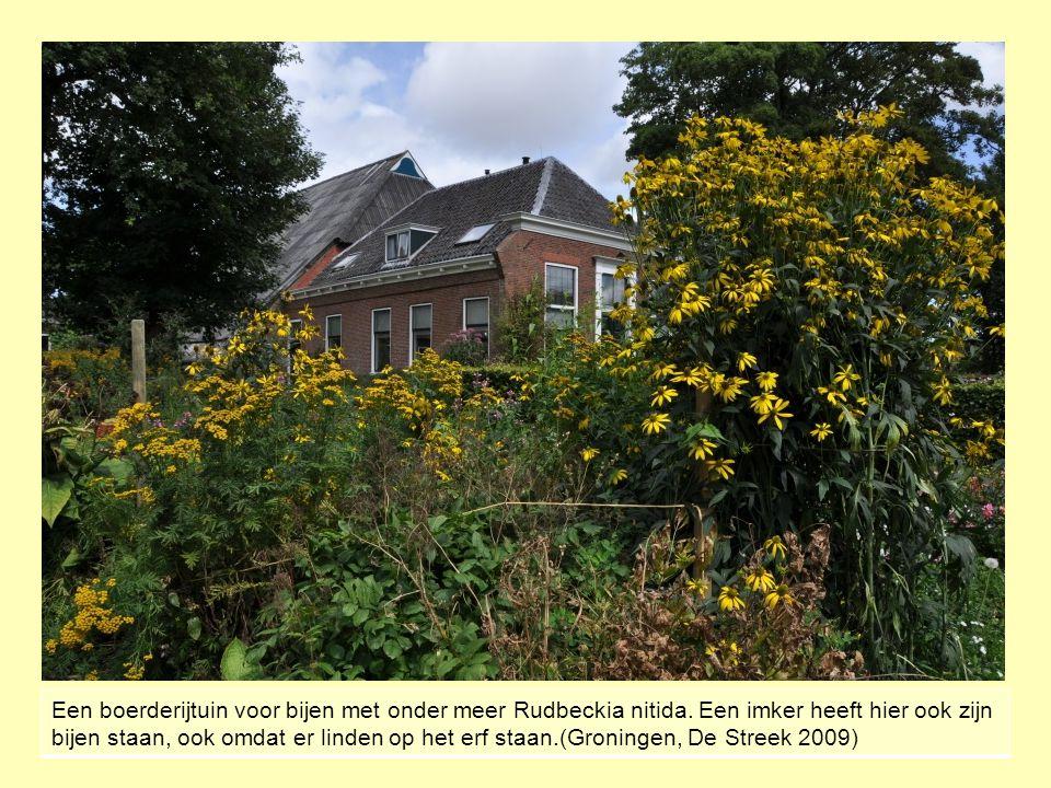Een boerderijtuin voor bijen met onder meer Rudbeckia nitida