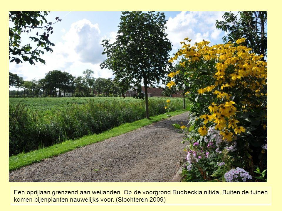 Een oprijlaan grenzend aan weilanden. Op de voorgrond Rudbeckia nitida