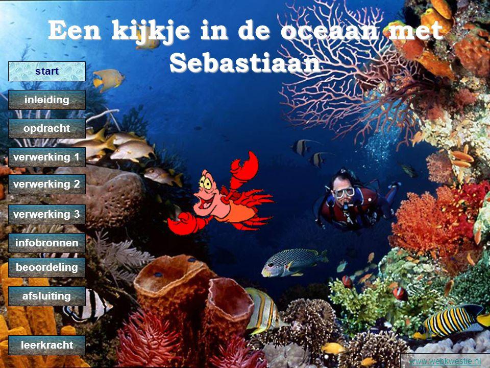 Een kijkje in de oceaan met Sebastiaan