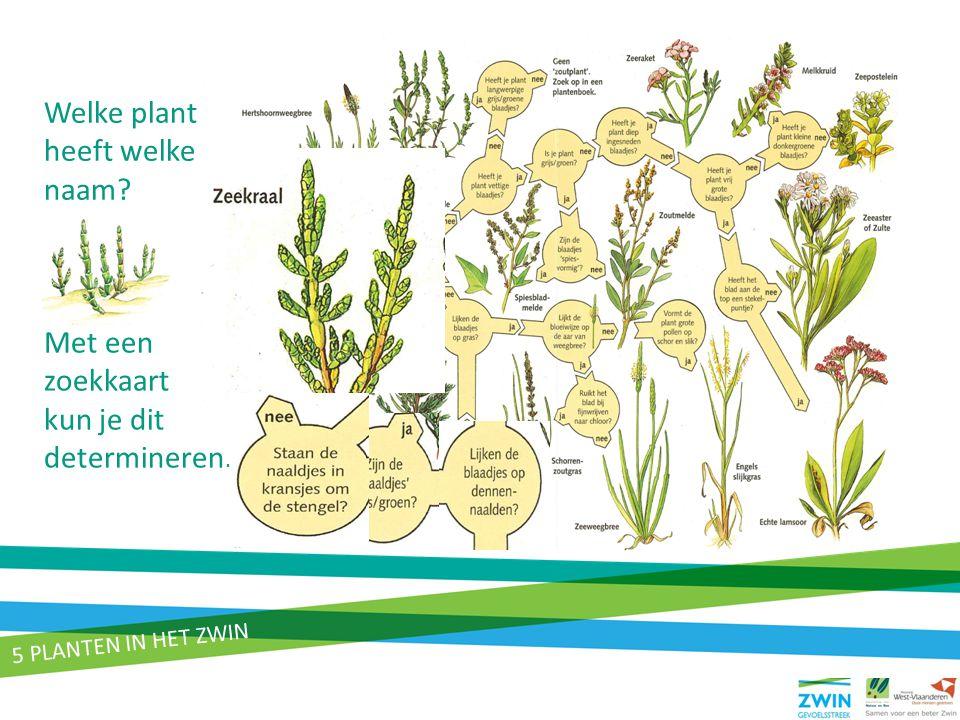 Welke plant heeft welke naam Met een zoekkaart kun je dit