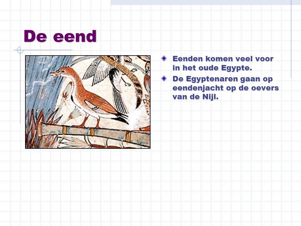 De eend Eenden komen veel voor in het oude Egypte.
