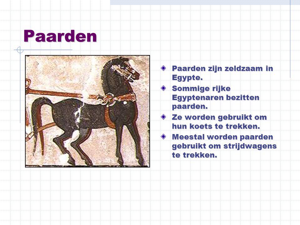 Paarden Paarden zijn zeldzaam in Egypte.