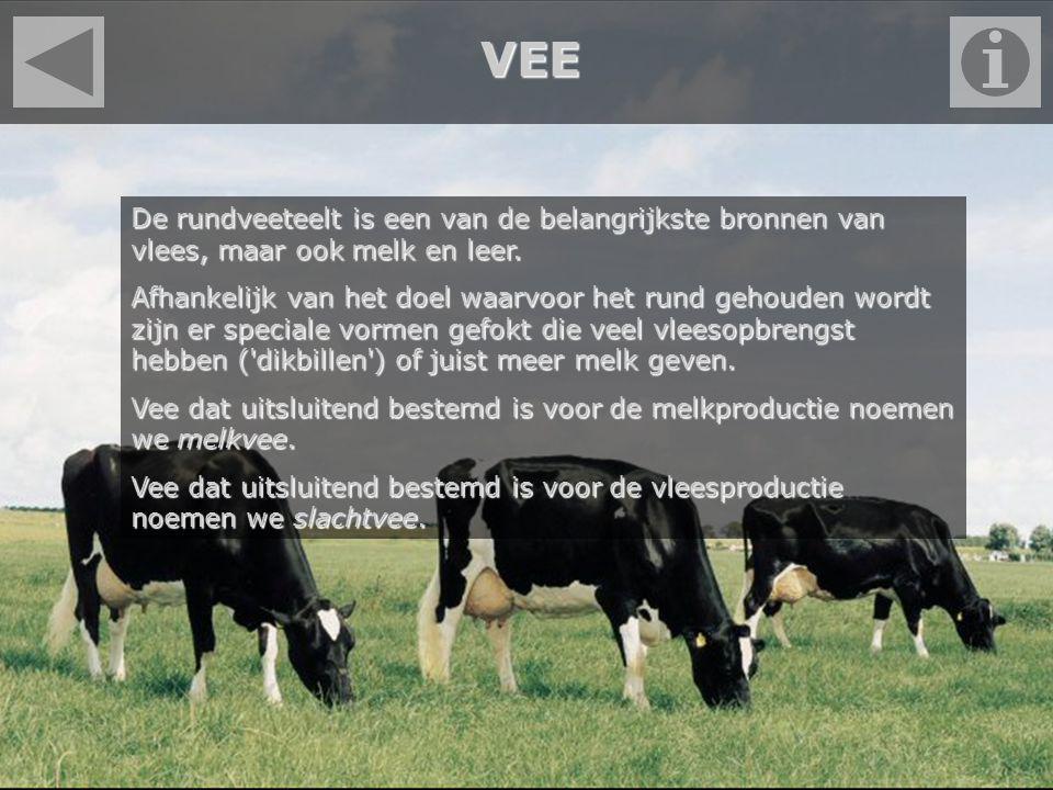 VEE De rundveeteelt is een van de belangrijkste bronnen van vlees, maar ook melk en leer.