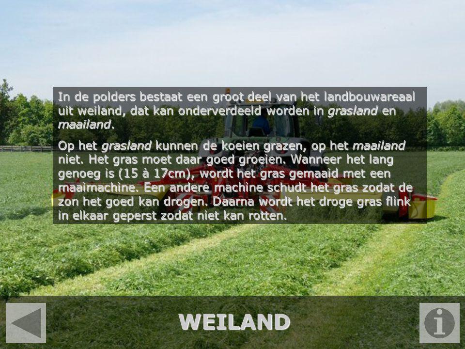 In de polders bestaat een groot deel van het landbouwareaal uit weiland, dat kan onderverdeeld worden in grasland en maailand.