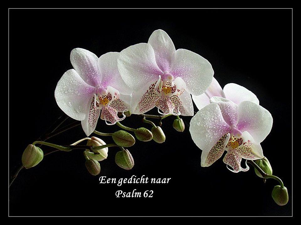 Een gedicht naar Psalm 62