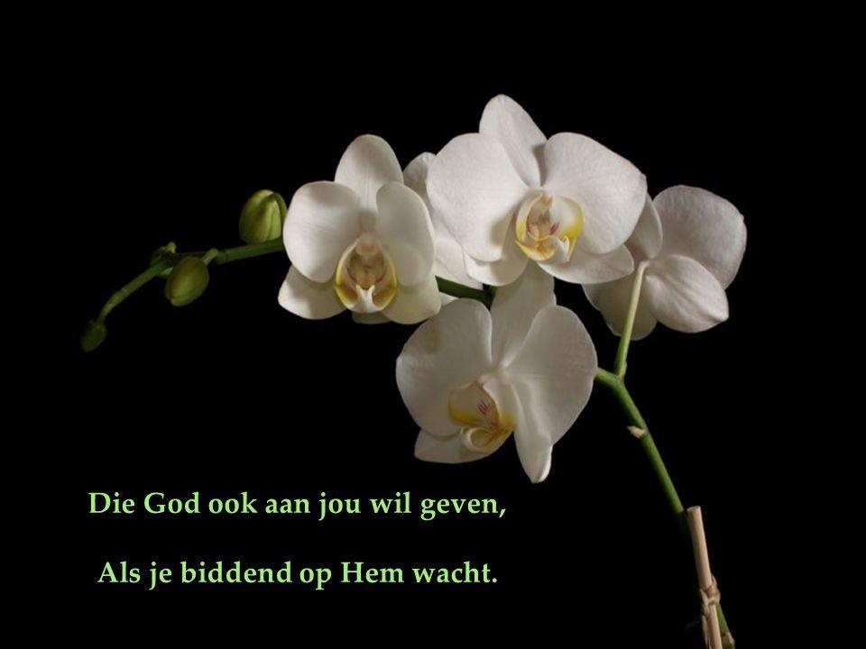 Die God ook aan jou wil geven, Als je biddend op Hem wacht.