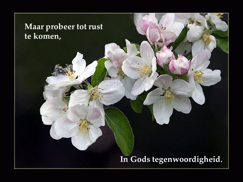 Maar probeer tot rust te komen, In Gods tegenwoordigheid.