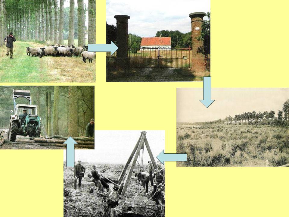 Grote ontginningen in de veldgebieden (2):